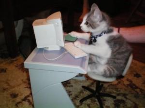 cat at a computer